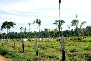 Zvyšky amazonského pralesa