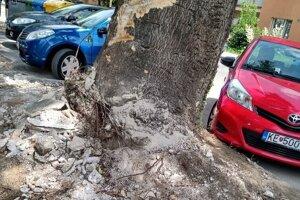Pajasene predstavujú nebezpečenstvo pre chodcov aj motoristov.