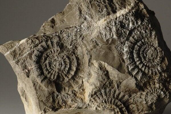 V druhohorách sa objavili nové formy amonitov, ktoré na ich konci úplne vymizli.