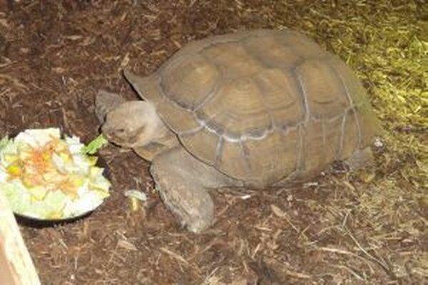 Vo viváriu chovajú korytnačky, hady aj krokodíly. Ale aj množstvo ďalších exotických zvierat.