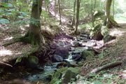 Slanské lesy.