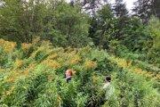 V záplave inváznych rastlín sa ženy doslova stratili.
