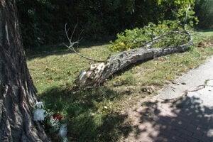 Zlomená časť stromu zasiahla deti.