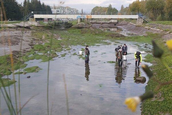 Po odstavení vody ešte vylovili uviaznuté ryby Liptovskí rybári.