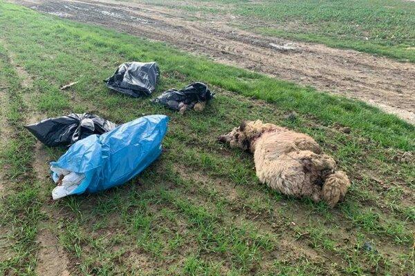 Cez týždeň niekto medzi obcami Kuzmice a Jacovce povyhadzoval odpad na pole.