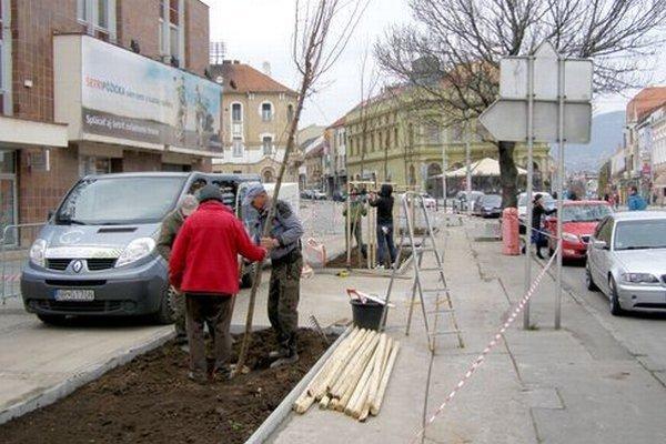 Katalpy pred bankou nahradili brestovce.