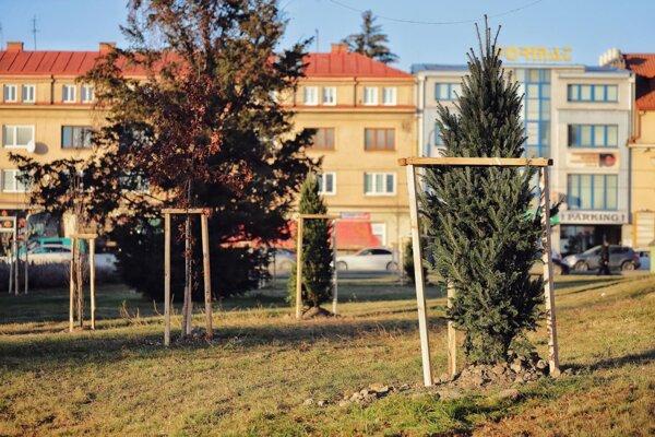 Nové stromy.