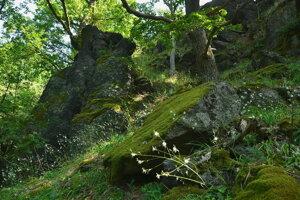 Prírodná pamiatka Belinské skaly je jednou z top atrakcií prvého cezhraničného geoparku na svete s názvom Novohrad-Nógrád.