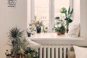 Izbové rastliny potrebujú v zime špecifickú starostlivosť.