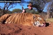 Obvinený Ján K. s uloveným tigrom v Juhoafrickej republike.