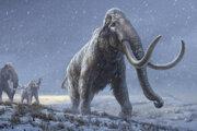 Ilustrácia mamuta stepného, ktorý bol predchodcom mamuta srstnatého.