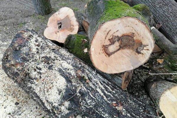 Výrub sa týkal stromov na Adámiho ulici.