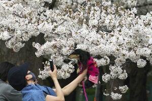 Selfie so sakurami je veľmi populárna.