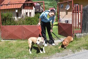 Podľa veterinára je dôležitá výchova psov zo strany majiteľa.