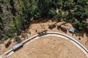 Ľudia sa snažia slony udržať mimo obývaných miest. ako návnadu im dávajú tony jedla alebo im zatarasia cestu nákladnými autami.