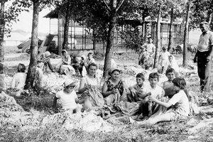 Kedysi sa pestoval tabak aj na poliach jednotného roľníckeho družstva v okolí obce.
