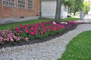 V Turčianskych Tepliciach popri jarnom kosení dokončili aj výsadbu letných záhonov kvetín.