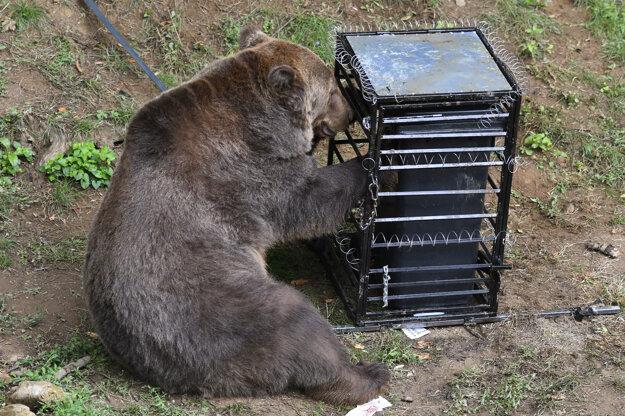 Akým testom prešiel medveď Žabo sa dočítate po kliknutí na obrázok.