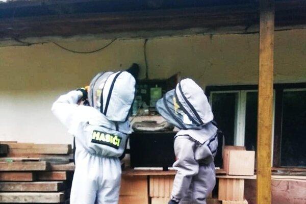 Osie hniezda likvidovali hasiči v špeciálnych odevoch