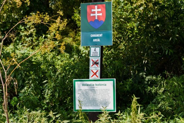 Do Volavčej kolónie je vstup zakázaný, platí tu štvrtý stupeň ochrany.
