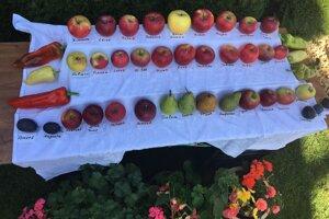 Na Kysuciach sa darí viacerým odrodám jabĺk.