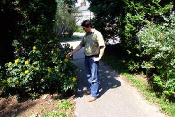 Riaditeľ Peter Hoťka vraví, že návštevnosť v Arboréte Mlyňany je v máji najvyššia.