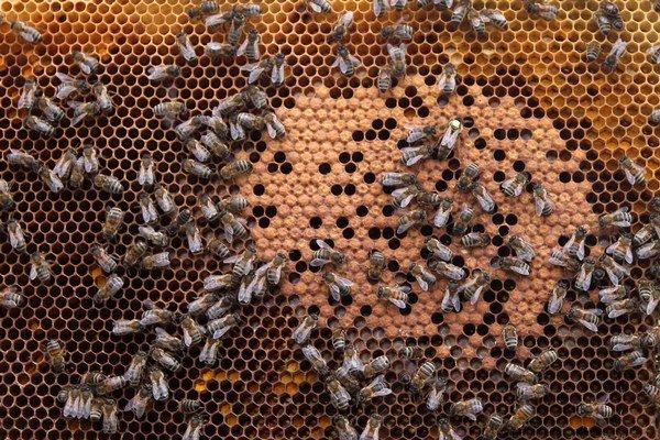 Včely tento rok veľa nektáru do úľov nepriniesli.