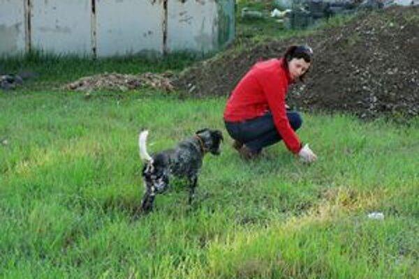 Situácia so psími exkrementami začína byť podľa mnohých v Trnave neúnosná.