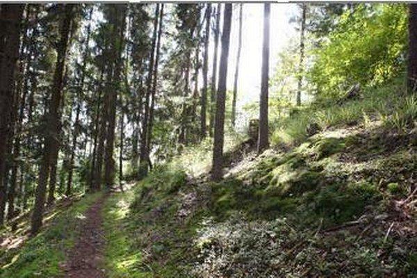 Petícia má ochrániť les