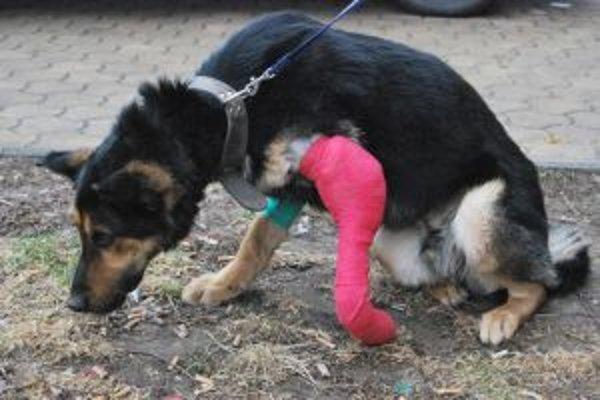 Rexov priestrel prednej labky si napokon vyžiadal jej amputáciu