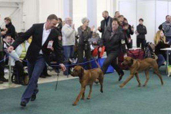 Milovníci a chovatelia psov sa zišli 22. a 23. januára 2011 na výstavisku v Trenčíne na Medzinárodnej výstave psov.
