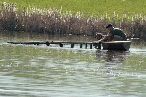 Ochranári sa snažia, aby na košských mokradiach zahniezdil rybár riečny.