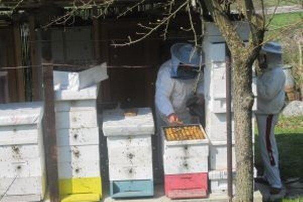 Tento rok sa z veľkej úrody včelári netešili.