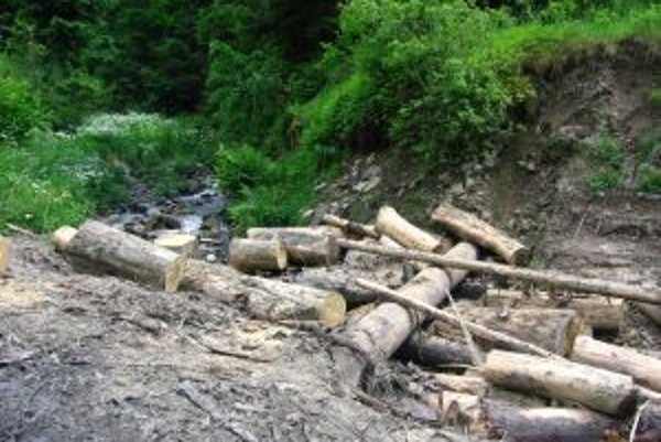 Zdravé kysucké lesy sú už minulosťou. Pochutnáva si na nich podkôrny hmyz, ničia huby a počasie.
