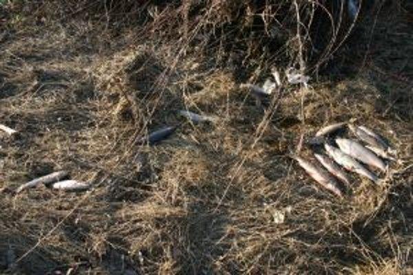 Na brehoch ešte teraz možno nájsť uhynuté telá rýb.