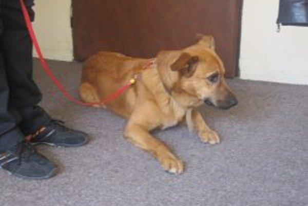 V nedeľu sa psík potuloval na malej železničnej zastávke v Čadci.