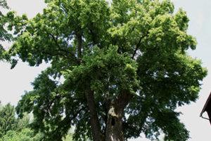Stromom roku 2009 sa v Čechách stala táto tisícročná lipa rastúca v osade Kotel neďaleko Osečnej na Liberecku.