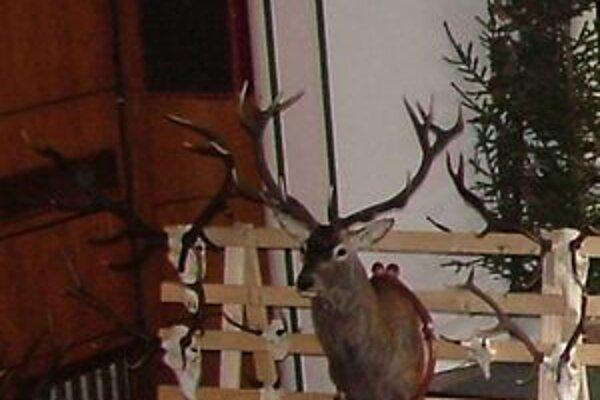 Do nedele si môžu milovníci poľovníctva prísť pozrieť do Kysuckého Nového Mesta najhodnotnejšie trofeje kysuckých poľovníkov.