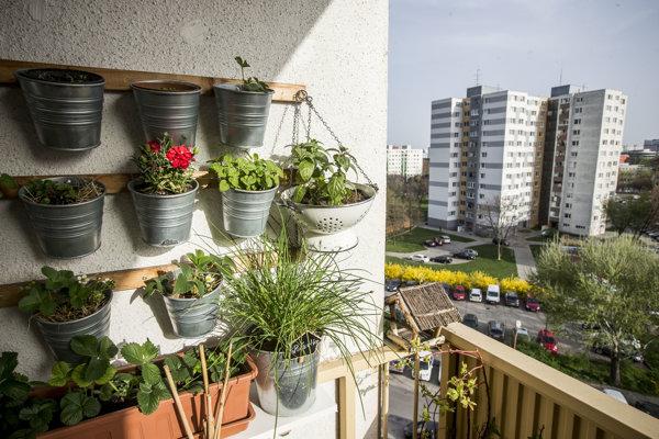 Jedlá záhradka sa dá pestovať aj v paneláku na sídlisku.