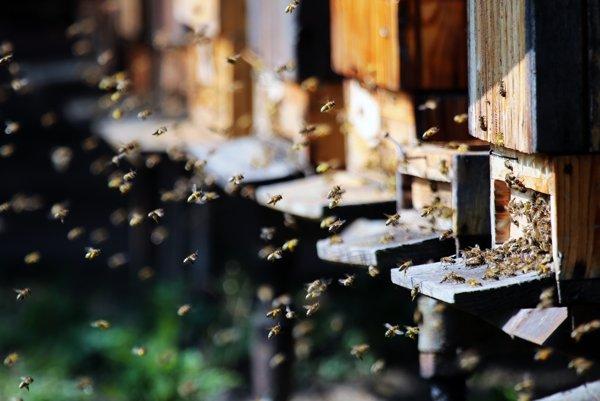 Včely už do úľov prinášajú peľ.