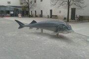 Na nádvorí zámku je plastika vyzy, najväčšej dunajskej ryby. Kedysi žila aj pri Bratislave v Dunaji.