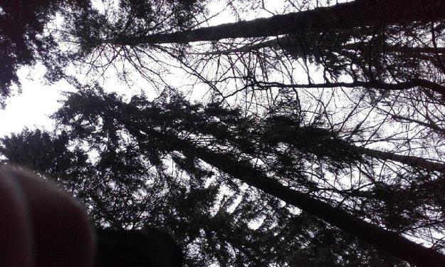 Muž spadol pomedzi tieto vysoké stromy.