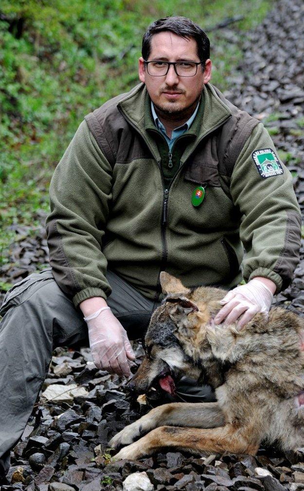 Pre dobrovoľného strážcu prírody Jaroslava Slašťana je úhyn gravidnej vlčice veľmi smutným okamihom. Negatívne to podľa neho ovplyvní biodiverzitu v tomto regióne.