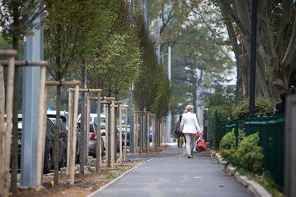 Hraby nahradili 21 v lete vyrúbaných stromov.
