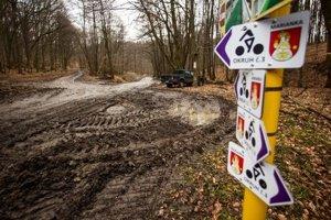 Rozbahnený les po ťažbe.
