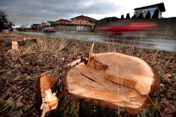 Pokiaľ auto pri nehode narazí do stromu, následky sú zvyčajne vážne.