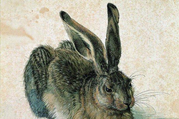 © Albertina, WienAlbrecht Dürer: Poľný zajac, 1502 zo zbierok vied.múzea Albertina