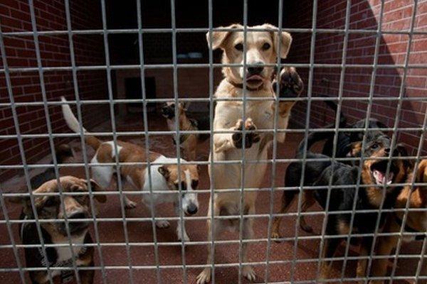 Viacero psíkov a mačiek z útulkov môže v sobotu nájsť domov.