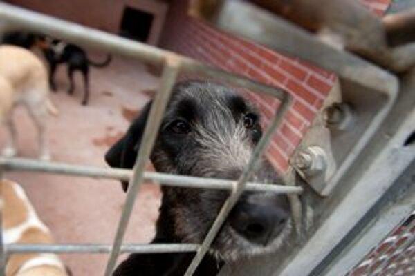 Po Vianociach sa mnoho psov a mačiek ocitlo na ulici, odkiaľ ich odviezli do útulku na Poliankach.