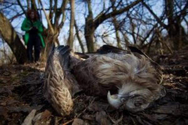 Polícia vyšetruje smrť vzácneho vtáka, ktorý na Slovensko prichádza zimovať zo severnej Európy.